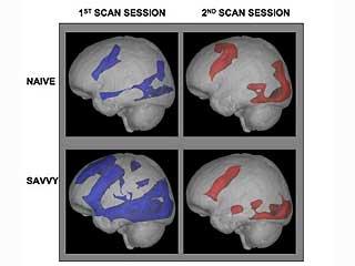 0_61_091020_internet_brain[1]